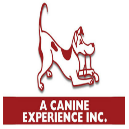 A Canine Experience