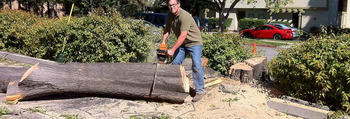 Paul Bauman's Tree Service