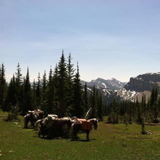 Summer Wilderness Trips In the Bob Marshall & Scapegoat Wilderness in Montana