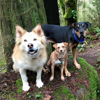 Happy Tails Dog Hiking Services