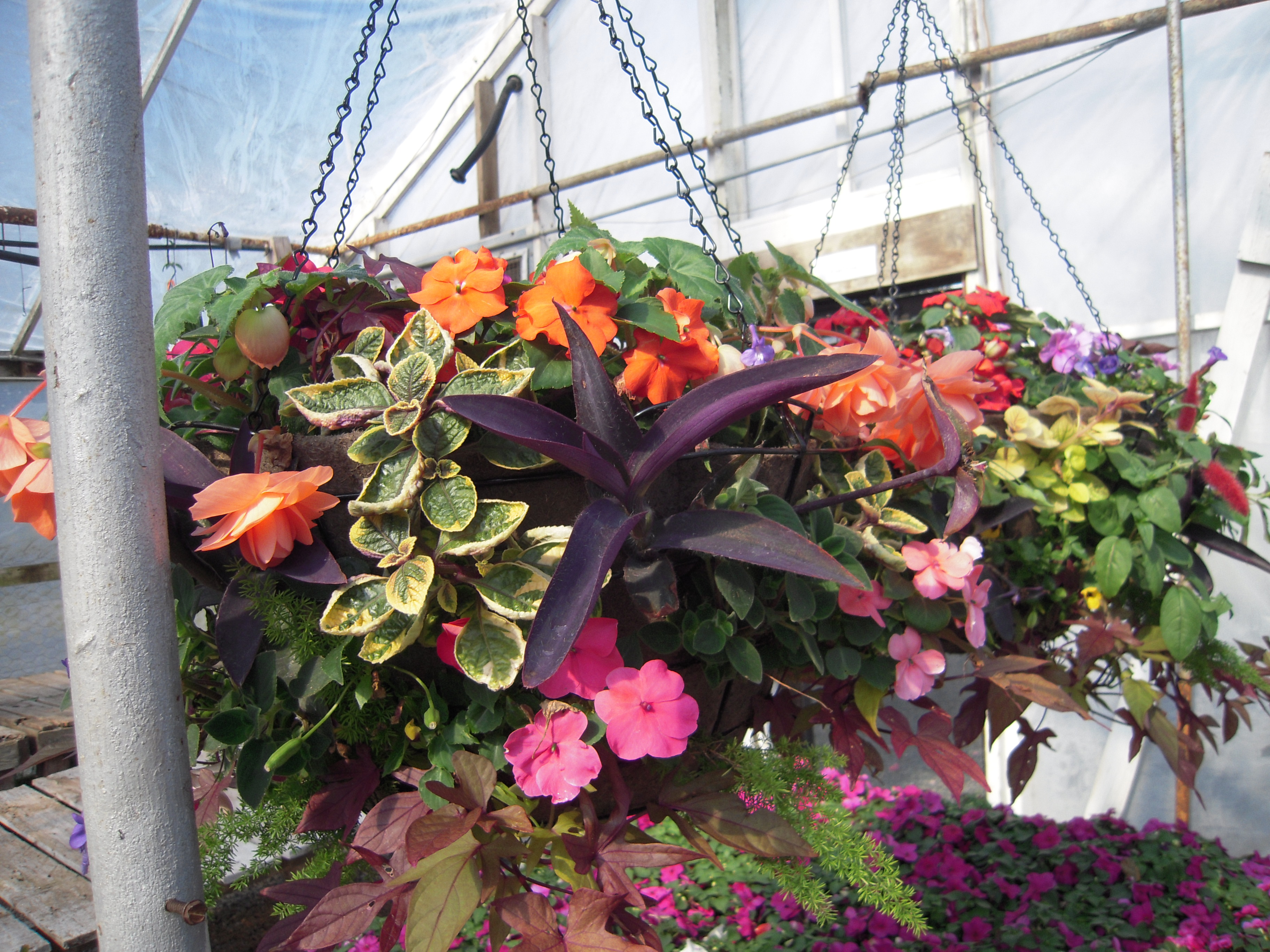 Spring/Summer Hanging Baskets