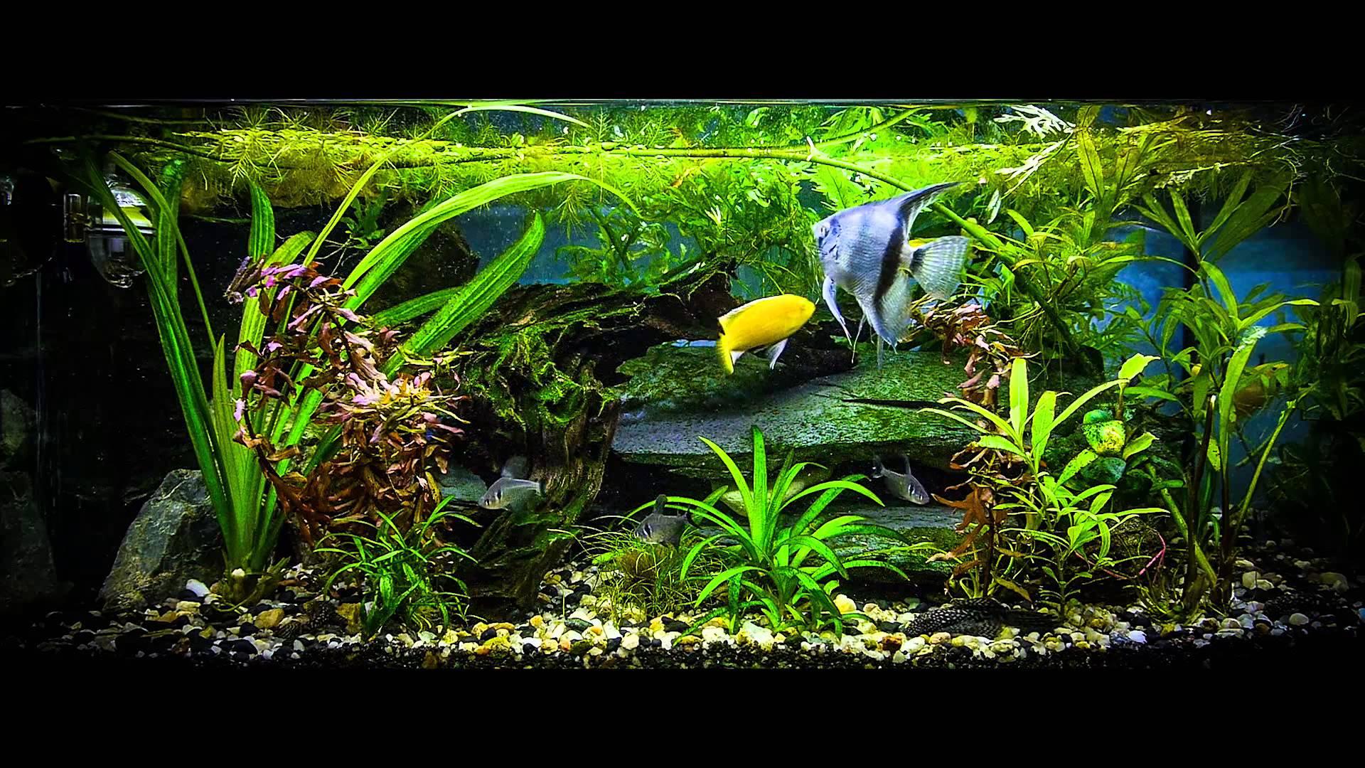 Bizx Aquarium Installation