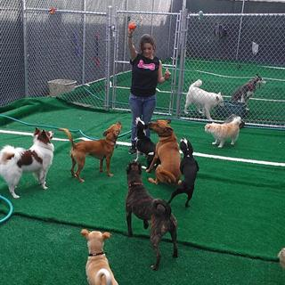 Doggy Day Care - Unlimited Weekday Stays per Month