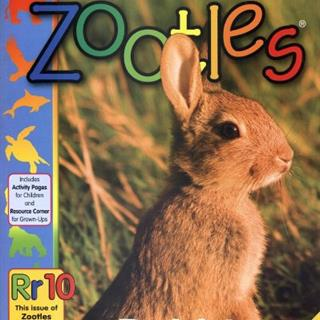 Zootles Magazine (24 issues)