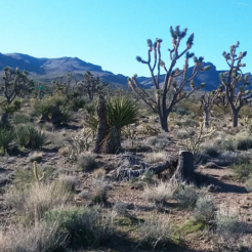 5 Acres of Land for Sale in Dolan Springs, Arizona